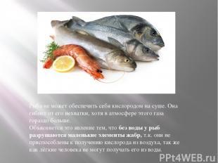 Рыба не можетобеспечить себя кислородом на суше. Она гибнет от его нехватки, хо