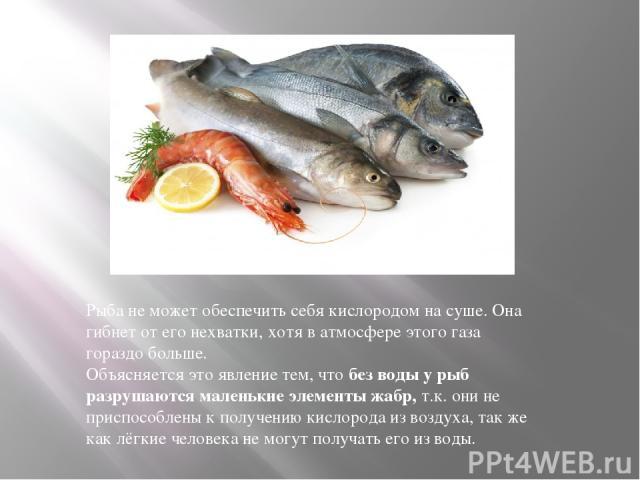 Рыба не можетобеспечить себя кислородом на суше. Она гибнет от его нехватки, хотя в атмосфере этого газа гораздобольше. Объясняется это явление тем, чтобез воды у рыб разрушаются маленькиеэлементы жабр,т.к. они не приспособлены к получению кисл…