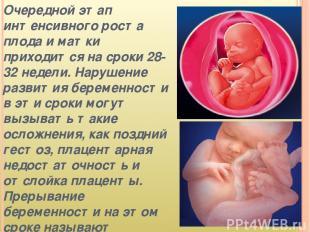Очередной этап интенсивного роста плода и матки приходится на сроки 28-32 недели