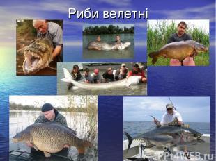 Риби велетні