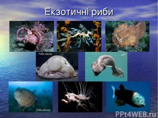 Екзотичні риби