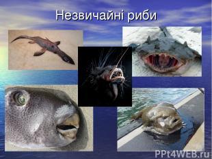 Незвичайні риби