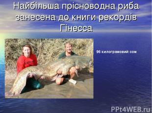 Найбільша прісноводна риба занесена до книги рекордів Гінесса 96 килограмовий со