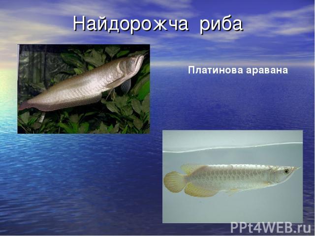 Найдорожча риба Платинова аравана