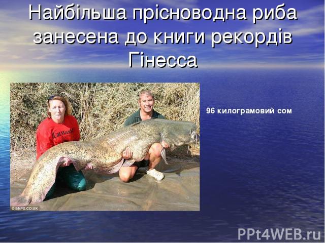 Найбільша прісноводна риба занесена до книги рекордів Гінесса 96 килограмовий сом