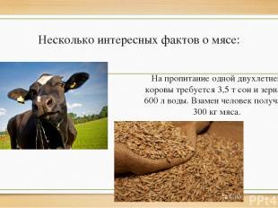 Несколько интересных фактов о мясе: На пропитание одной двухлетней коровы требуе
