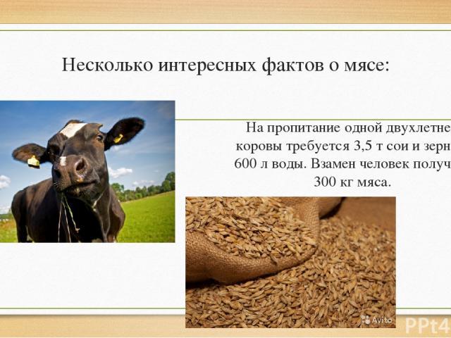 Несколько интересных фактов о мясе: На пропитание одной двухлетней коровы требуется 3,5 т сои и зерна и 600 л воды. Взамен человек получает 300 кг мяса.