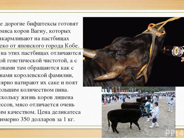 Самые дорогие бифштексы готовят из мяса коров Вагиу, которых выкармливают на пастбищах недалеко от японского города Кобе. Травы на этих пастбищах отличаются редкой генетической чистотой, а с коровами там обращаются как с членами королевской фамилии,…