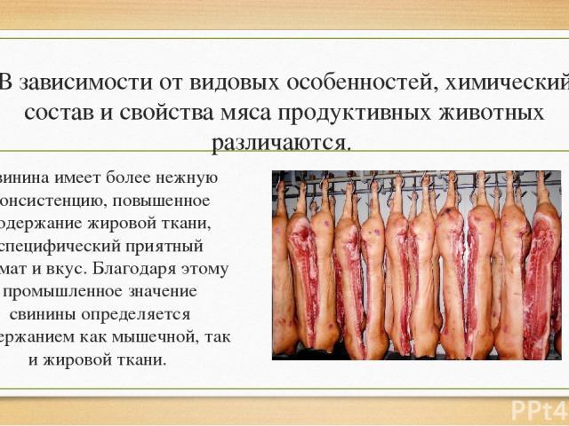 В зависимости от видовых особенностей, химический состав и свойства мяса продуктивных животных различаются. Свинина имеет более нежную консистенцию, повышенное содержание жировой ткани, специфический приятный аромат и вкус. Благодаря этому промышлен…
