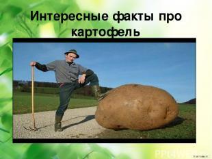 Интересные факты про картофель