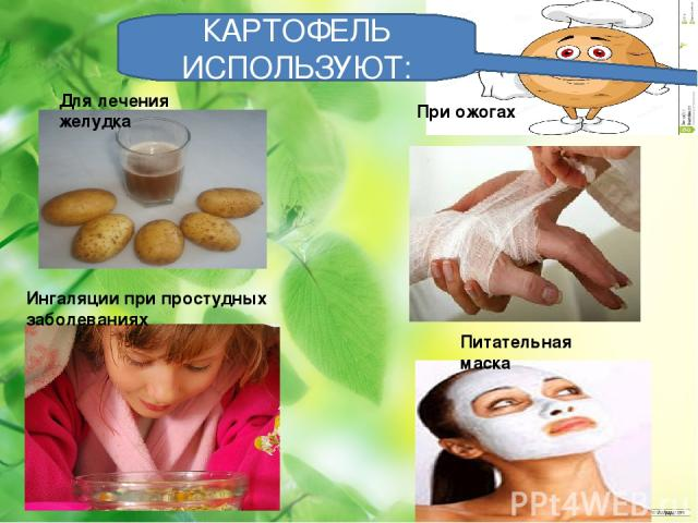 КАРТОФЕЛЬ ИСПОЛЬЗУЮТ: Для лечения желудка При ожогах Ингаляции при простудных заболеваниях Питательная маска
