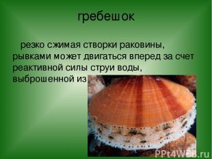 гребешок резко сжимая створки раковины, рывками может двигаться вперед за счет р