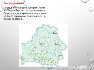 Распространение: Подвид, обитающий в центральной и восточной Европе, распростран