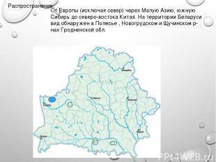 Распространение: От Европы (исключая север) через Малую Азию, южную Сибирь до се