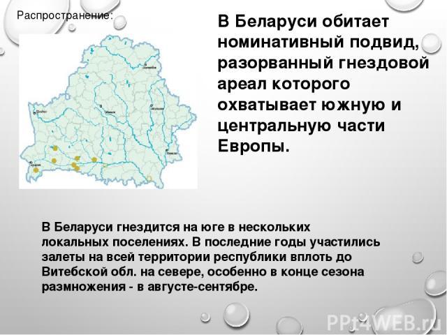 Распространение: В Беларуси обитает номинативный подвид, разорванный гнездовой ареал которого охватывает южную и центральную части Европы. В Беларуси гнездится на юге в нескольких локальных поселениях. В последние годы участились залеты на всей терр…