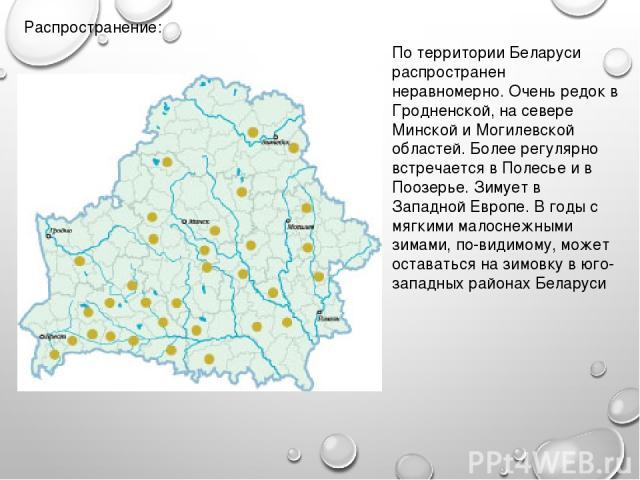Распространение: По территории Беларуси распространен неравномерно. Очень редок в Гродненской, на севере Минской и Могилевской областей. Более регулярно встречается в Полесье и в Поозерье. Зимует в Западной Европе. В годы с мягкими малоснежными зима…