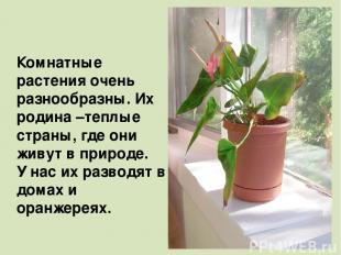 Комнатные растения очень разнообразны. Их родина –теплые страны, где они живут в