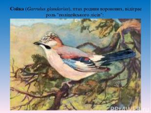 """Сойка (Garrulus glandarius), птах родини воронових, відіграє роль """"поліцейського"""