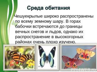 Чешуекрылые широко распространены по всему земному шару. В горах бабочки встреча