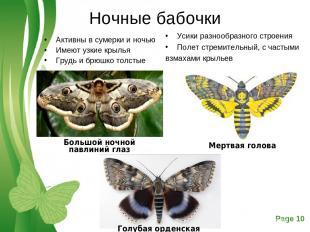 Ночные бабочки Активны в сумерки и ночью Имеют узкие крылья Грудь и брюшко толст