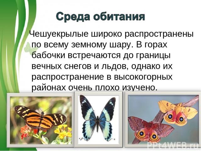 Чешуекрылые широко распространены по всему земному шару. В горах бабочки встречаются до границы вечных снегов и льдов, однако их распространение в высокогорных районах очень плохо изучено. Free Powerpoint Templates Page *
