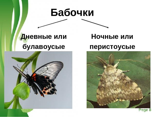 Бабочки Дневные или булавоусые Ночные или перистоусые Free Powerpoint Templates Page *