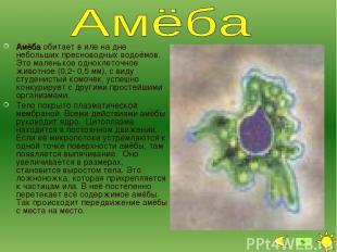 Амёба обитает в иле на дне небольших пресноводных водоёмов. Это маленькое однокл