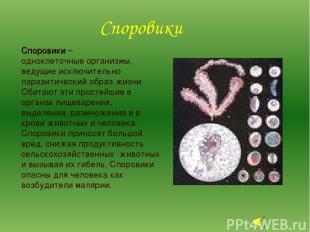 Споровики – одноклеточные организмы, ведущие исключительно паразитический образ