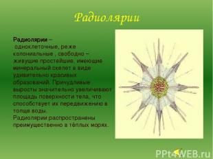 Радиолярии – одноклеточные, реже колониальные , свободно – живущие простейшие, и
