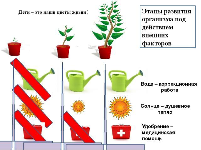 Этапы развития организма под действием внешних факторов Вода – коррекционная работа Солнце – душевное тепло Удобрение – медицинская помощь Дети – это наши цветы жизни!