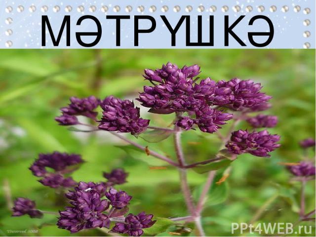 МӘТРҮШКӘ