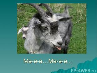Мә-ә-ә…Мә-ә-ә…