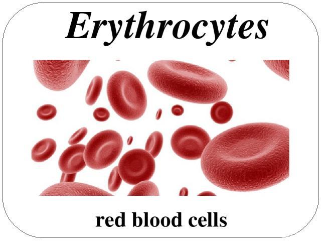 red blood cells Erythrocytes