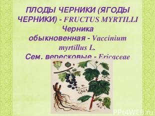 ПЛОДЫ ЧЕРНИКИ (ЯГОДЫ ЧЕРНИКИ)-FRUCTUS MYRTILLI Черника обыкновенная-Vacciniu