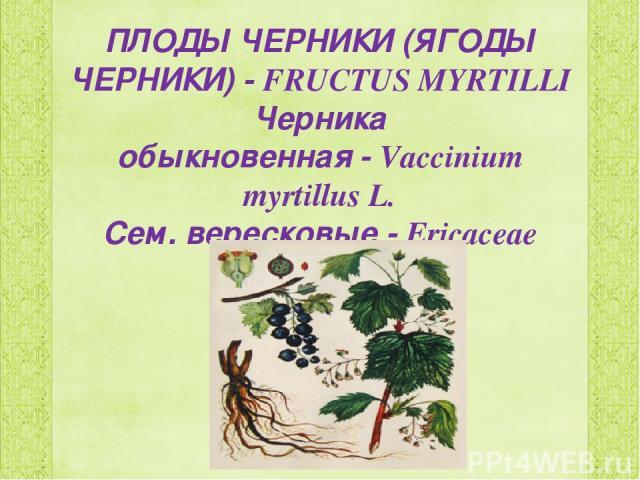 ПЛОДЫ ЧЕРНИКИ (ЯГОДЫ ЧЕРНИКИ)-FRUCTUS MYRTILLI Черника обыкновенная-Vaccinium myrtillus L. Сем. вересковые-Ericaceae