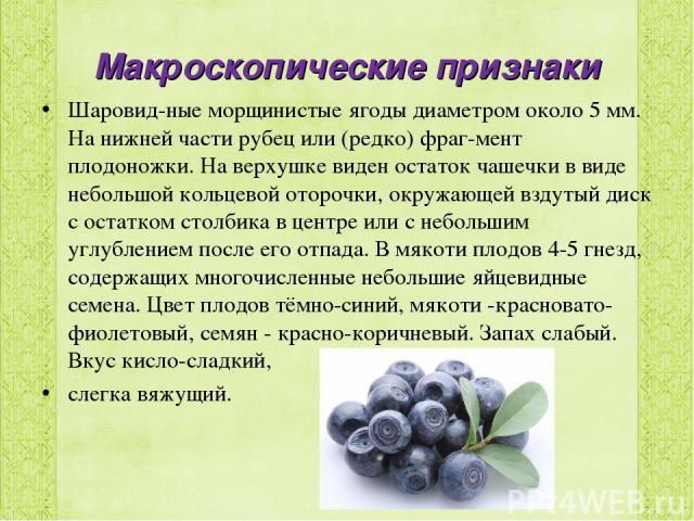 Макроскопические признаки Шаровид ные морщинистые ягоды диаметром около 5 мм. На нижней части рубец или (редко) фраг мент плодоножки. На верхушке виден остаток чашечки в виде небольшой кольцевой оторочки, окружающей вздутый диск с остатком столбика …