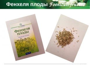 Фенхеля плоды Foeniculi fructus Показания к применению ветрогонное средство при