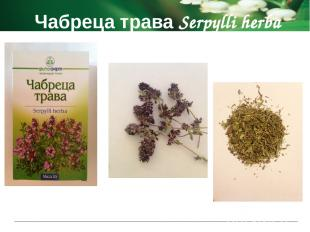 Чабреца трава Serpylli herba Показания к применению при легочных заболеваниях ка