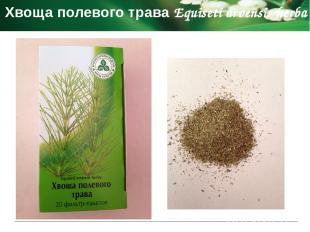 Подорожника большого листья Plantaginis majoris folia Фармакологическое действие