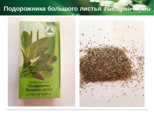 Показания к применению Мяты перечной листья Menthae piperitae foli спазмы гладко