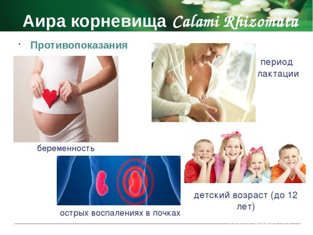 Аира корневища Calami Rhizomata Побочные действия не принимают при беременности рвота не принимают в период лактации