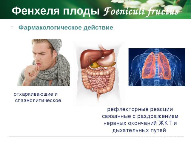 Фенхеля плоды Foeniculi fructus Противопоказания повышенная чувствительность