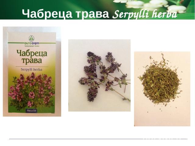 Чабреца трава Serpylli herba Показания к применению при легочных заболеваниях как отхаркивающее, дезинфицирующее средство