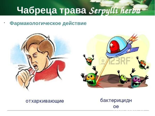 Чабреца трава Serpylli herba Противопоказания болезни печени и почек, гастрит, язвенная болезнь желудка период беременности и лактации