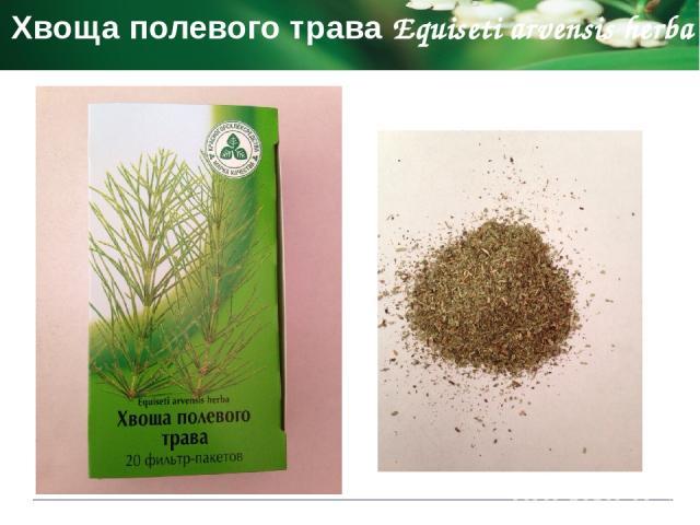 Подорожника большого листья Plantaginis majoris folia Фармакологическое действие усиливает секрецию бронхиальных желез стимулирует выделению желудочного сока