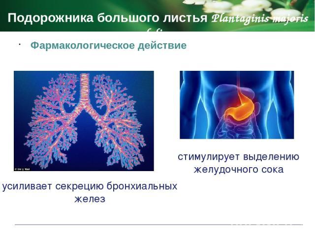 Противопоказания Мяты перечной листья Menthae piperitae foli ранний детский возраст (до 3-х лет) повышенная чувствительность к препарату