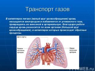 Транспорт газов В капиллярах легких (малый круг кровообращения) кровь насыщается