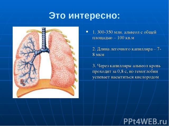 Это интересно: 1. 300-350 млн. альвеол с общей площадью – 100 кв.м 2. Длина легочного капилляра – 7-8 мкм 3. Через капилляры альвеол кровь проходит за 0,8 с, но гемоглобин успевает насытиться кислородом