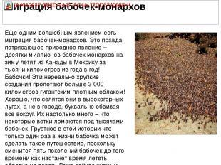 Еще одним волшебным явлением есть миграция бабочек-монархов. Это правда, потряса