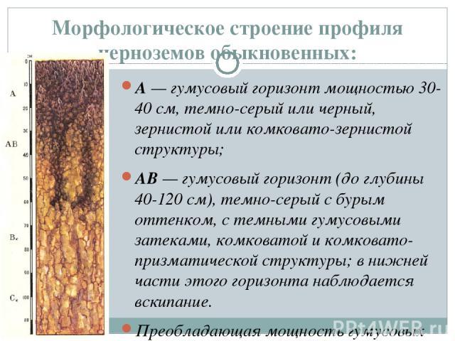 Морфологическое строение профиля черноземов обыкновенных: А— гумусовый горизонт мощностью 30-40 см, темно-серый или черный, зернистой или комковато-зернистой структуры; АВ— гумусовый горизонт (до глубины 40-120 см), темно-серый с бурым оттенком, с…